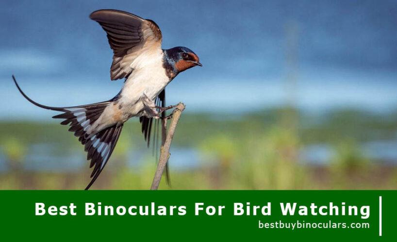 best-buy-binoculars-for-birdwatching-2019