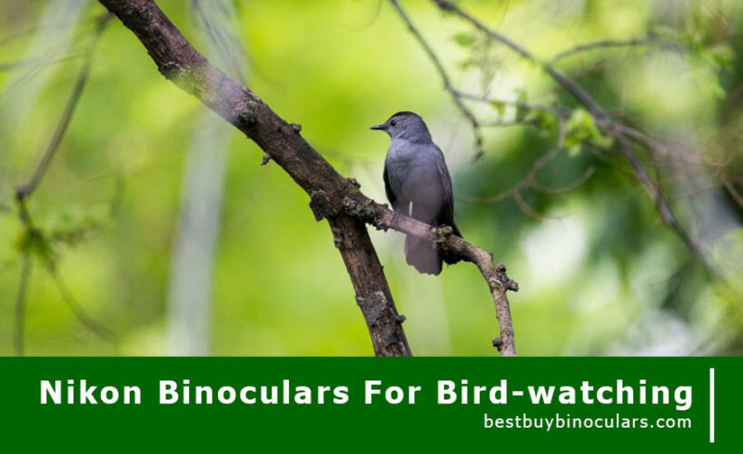 Best Nikon Binoculars for bird watching