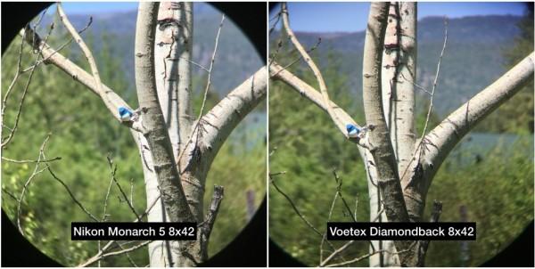 Vortex Optics Diamondback 8x42 vs Nikon Monarch 5 8x42