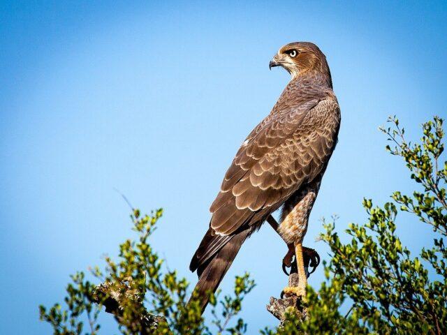 Bushnell Falcon 133410 image