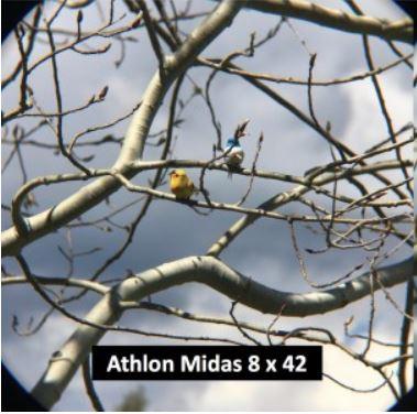 bestbuybinoculars Athlon Optics 8x42 image quality